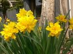 花盛り3.JPG